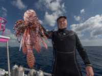 Roger J. Muller, Jr. hunting lionfish