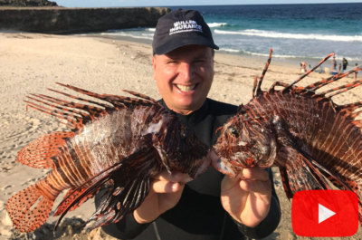 Lionfish catch