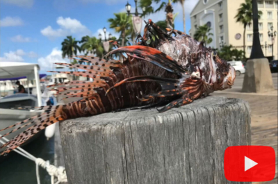 Lionfish on dock