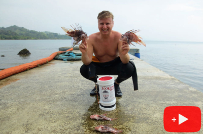 Lionfish hunting Panama