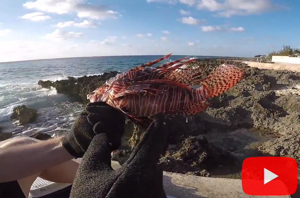 Lionfish cleaning