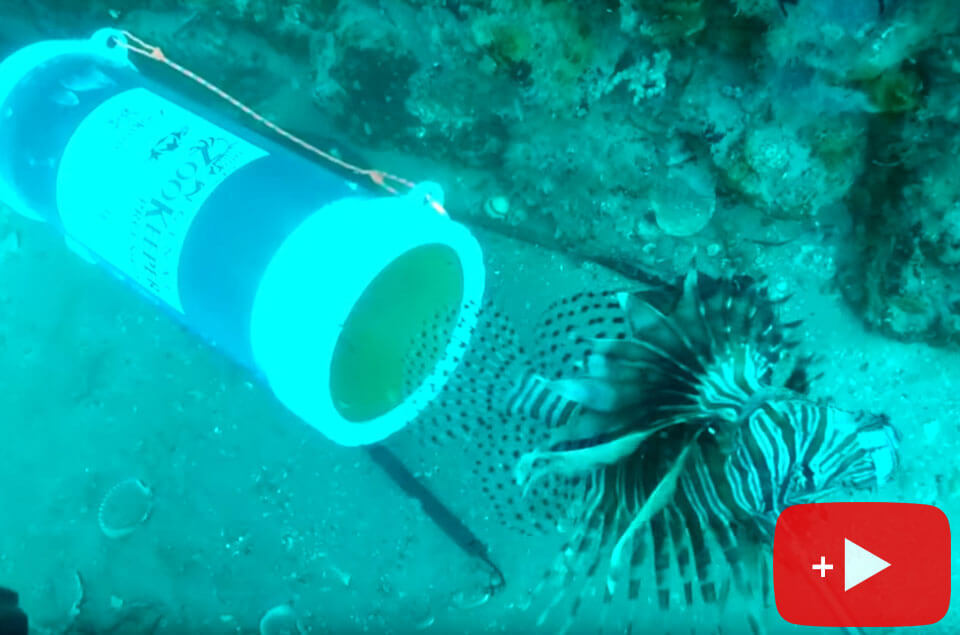 Lionfish going in ZooKeeper