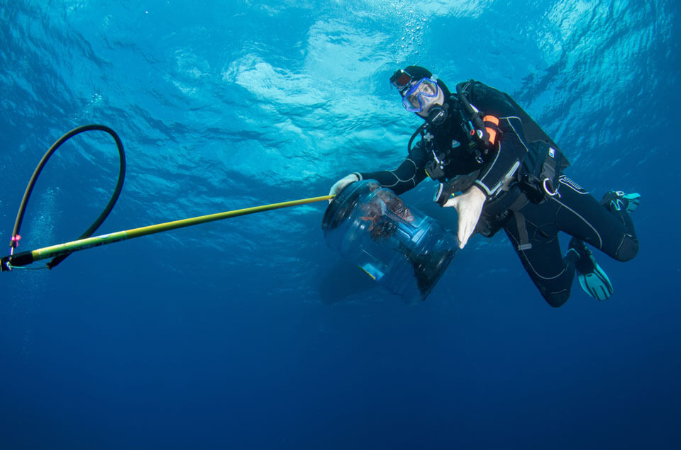 Scuba diver contains a lionfish