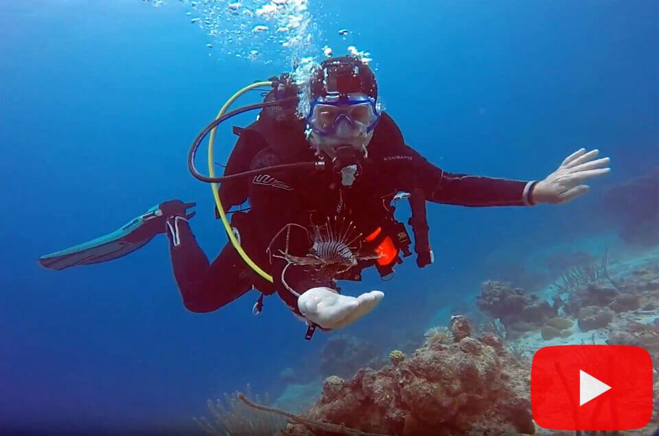 Dangerous lionfish taming