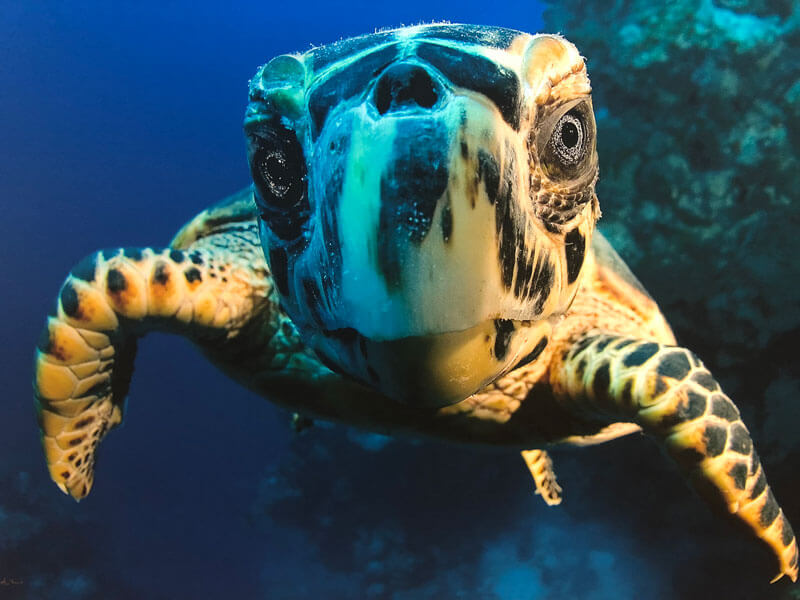 Turtle seen on scuba dive