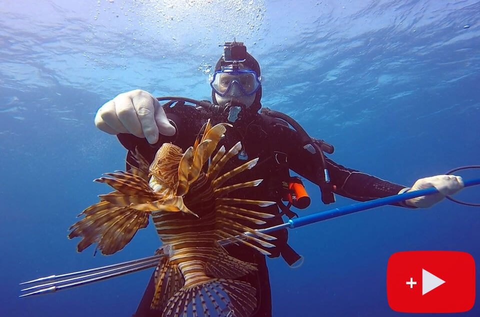 Lionfish on a spear