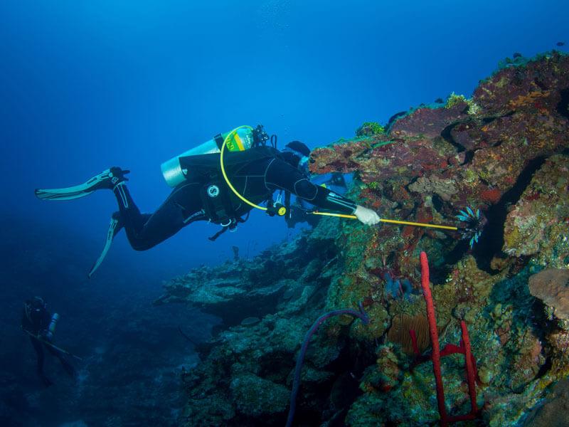 lionfish hunting Roger J Muller Jr
