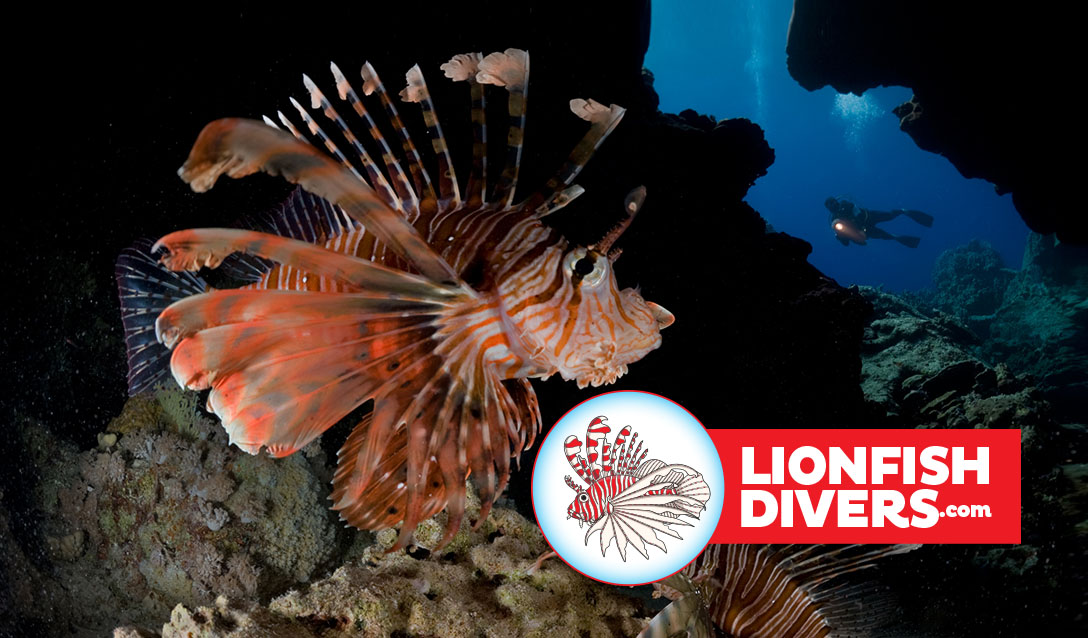 Lionfish in the ocean