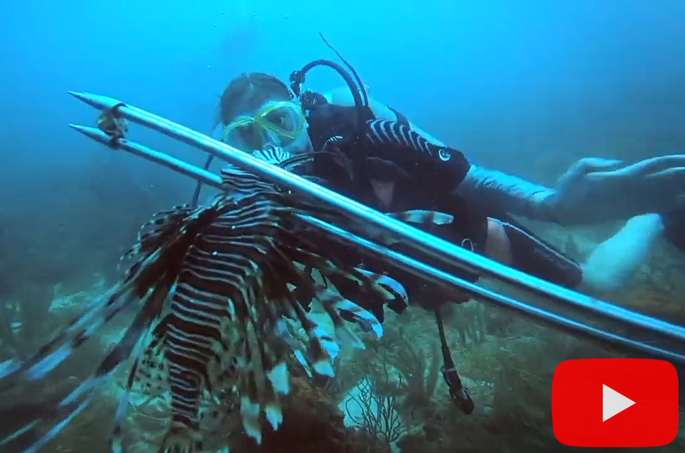 Spearing lionfish in Aruba